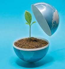 تصفیه پساب توسط گیاه