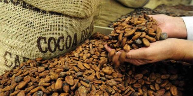 نحوه تولید شکلات از دانه های کاکائو