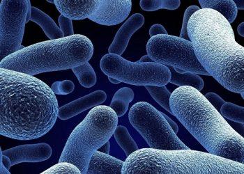 میکروارگانیسم های پروبیوتیک