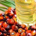 گیاه پالم روغنی - روغن پالم - پالم روغنی - اسیدهای اشباع و غیراشباع - روغن پالم تصفیه شده
