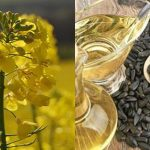 روغن دانه کلزا - پایین ترین سطح از اسیدهای اشباع - روغن دانه آفتابگردان