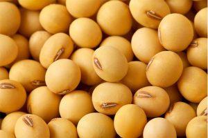 سویا ایزوله چیست و چه کاربردی در صنایع غذایی دارد؟