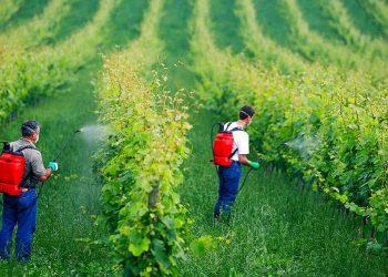 همه چیز درباره سولفات مس کشاورزی